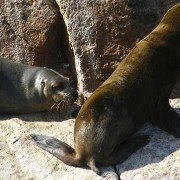 Paracas - Nasca -
