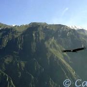 Canocota, Pinchollo Geiser, Cabanaconde & the Colca Canyon